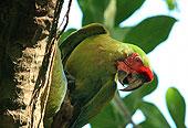 macaws_1_06
