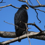 HAWK-COMMON BLACK-FIBB-FR-20120124- 045